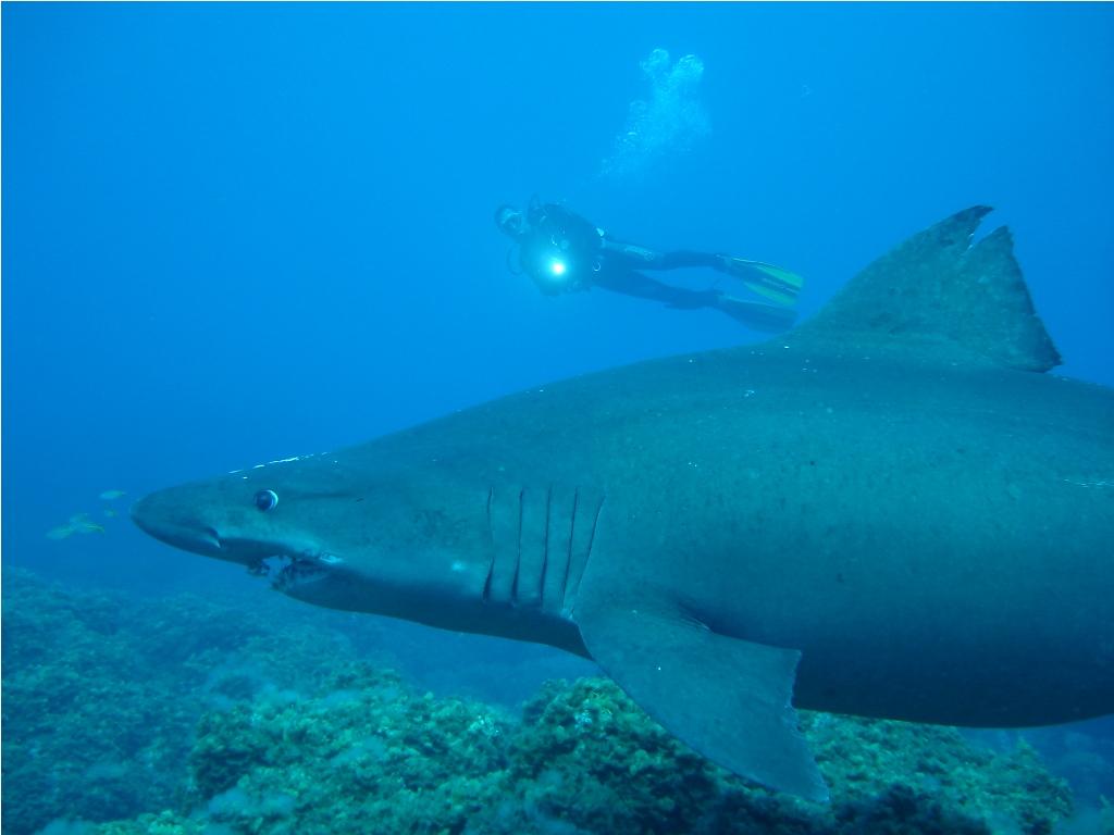 Arrecifal Tauche El Hierro Padi Tauchzentrum Kanarische Inseln